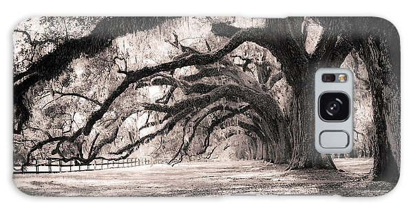 Tree Galaxy Case - Boone Hall Plantation Live Oaks by Dustin K Ryan