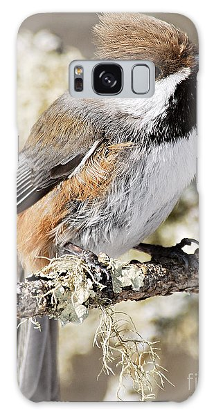Boreal Chickadee Galaxy Case