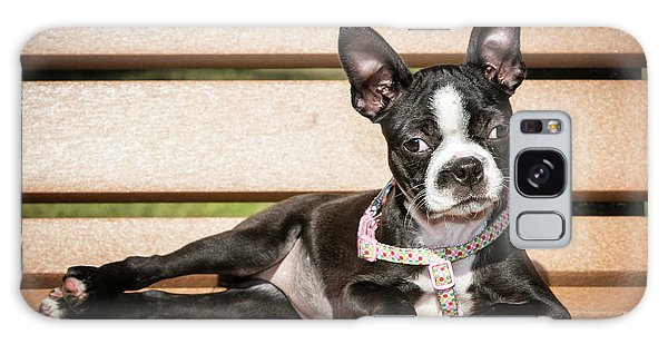 Boston Terrier Puppy Relaxing Galaxy Case by Stephanie Hayes