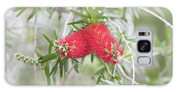 Bottlebrush Galaxy Case
