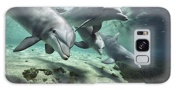 Galaxy Case featuring the photograph Four Bottlenose Dolphins Hawaii by Flip Nicklin