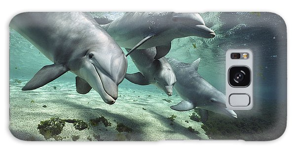 Four Bottlenose Dolphins Hawaii Galaxy Case