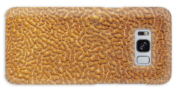 Brain Coral 47 Galaxy Case
