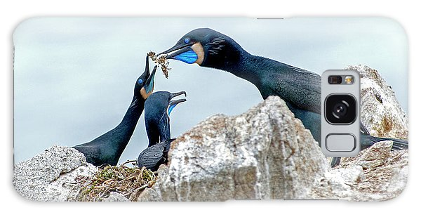 Brandt's Cormorant Feeding Family Galaxy Case