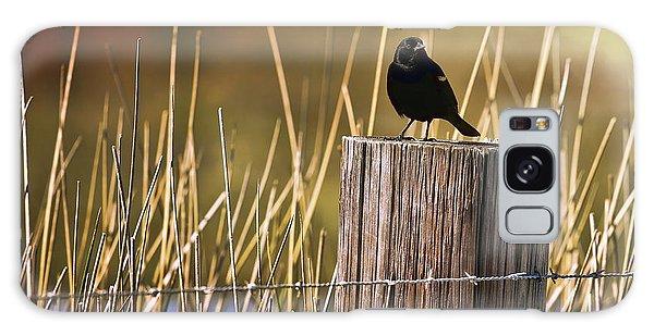 Breaking Dawn Galaxy Case - Breaking Dawn Blackbird by Judy Vincent