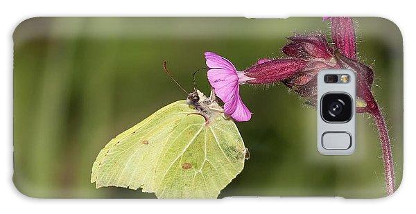 Brimstone Butterfly Galaxy Case
