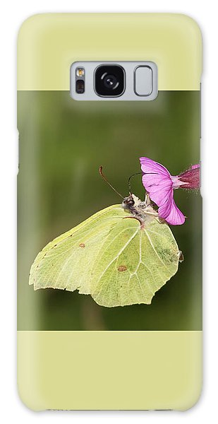 Brimstone Butterfly Galaxy Case