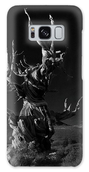 Bristlecone Pine Galaxy Case by Art Shimamura