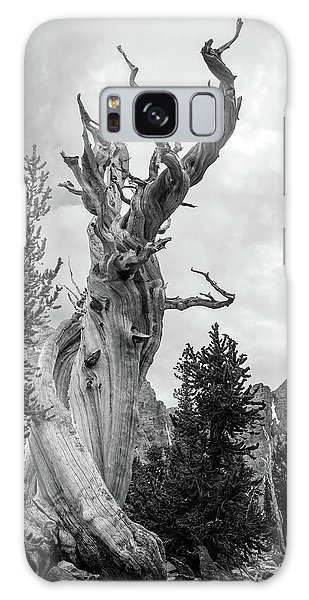 White Mountain National Forest Galaxy Case - Bristlecone Pine by Johnny Adolphson