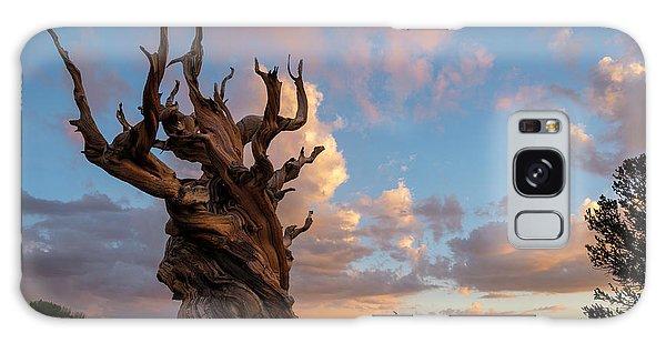 Bristlecone Pine Sunset Galaxy Case