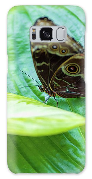 Brown And Blue Butterfly Galaxy Case
