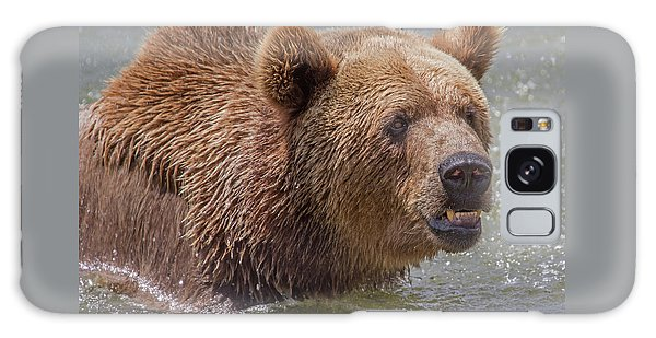 Brown Bear 10 Galaxy Case