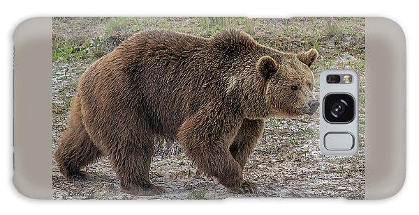 Brown Bear 6 Galaxy Case