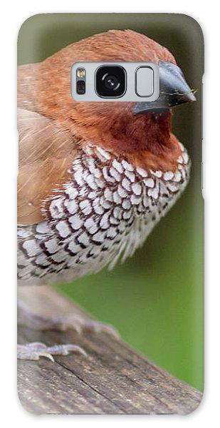 Brown Bird Galaxy Case