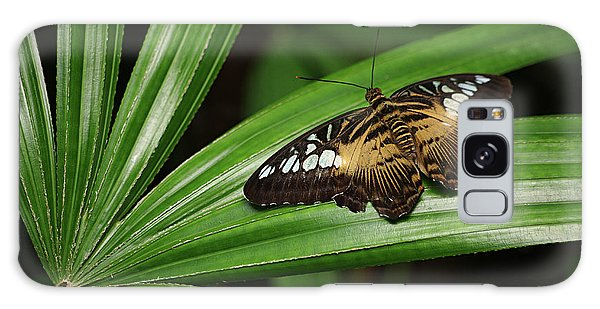 Brown Clipper Butterfly -parthenos Sylvia- On Frond Galaxy Case