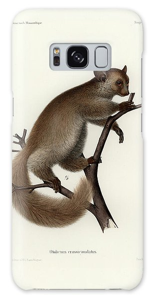 Brown Greater Galago Or Thick-tailed Bushbaby Galaxy Case