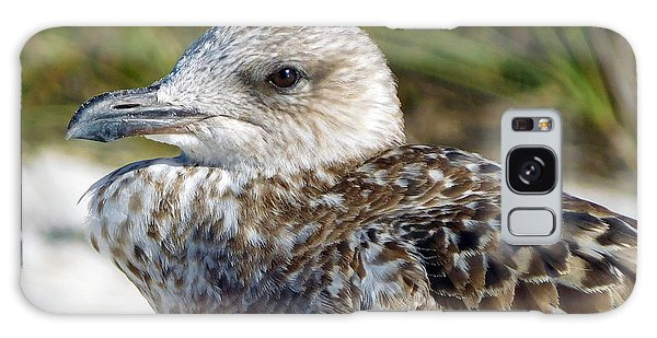 Brown Gull At Wiggins Pass Galaxy Case