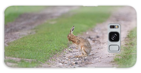 Brown Hare Cleaning Galaxy Case