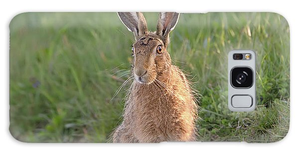 Brown Hare Sat On Track At Dawn Galaxy Case
