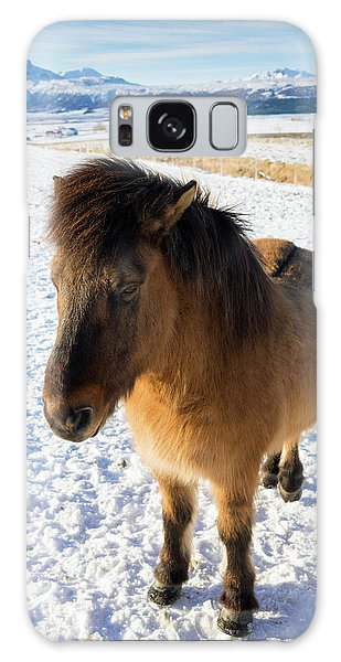 Brown Icelandic Horse In Winter In Iceland Galaxy Case by Matthias Hauser