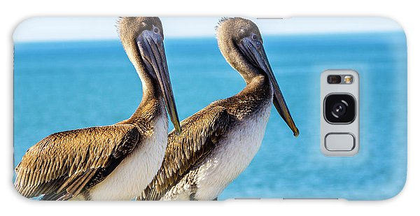 Brown Pelican Pair Galaxy Case