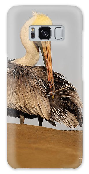 Brown Pelican Preening Feathers On Shifting Sands Galaxy Case by Max Allen