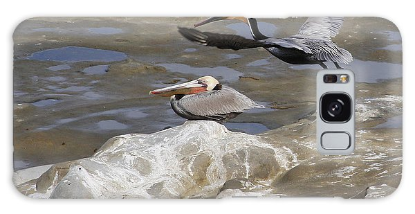 Brown Pelicans At La Jolla Cove Galaxy Case by Jan Cipolla