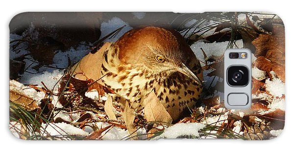 Brown Thrasher Closeup Galaxy Case