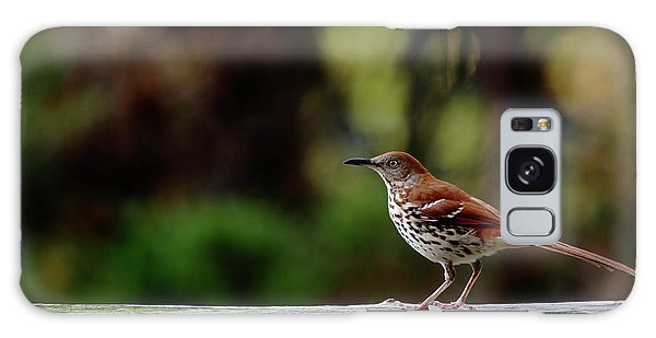 Brown Thrasher Facing East Galaxy Case