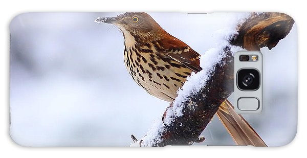 Brown Thrasher In Snow Galaxy Case