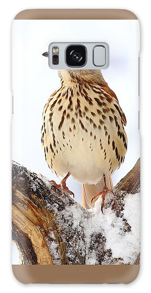 Brown Thrasher With Snow  Galaxy Case