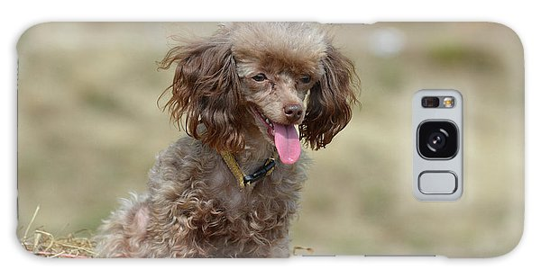 Brown Toy Poodle On Bail Of Hay Galaxy Case