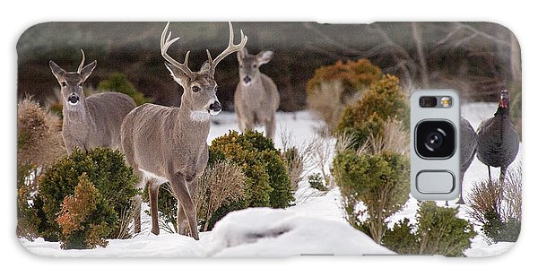 Galaxy Case featuring the photograph Buck And Turkey by Angel Cher