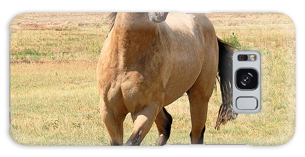 Buckskin Stallion From Front Galaxy Case by Cheryl Poland