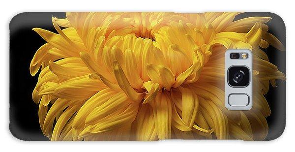 Bud Opening-chrysanthemum 'allison Peace Galaxy Case