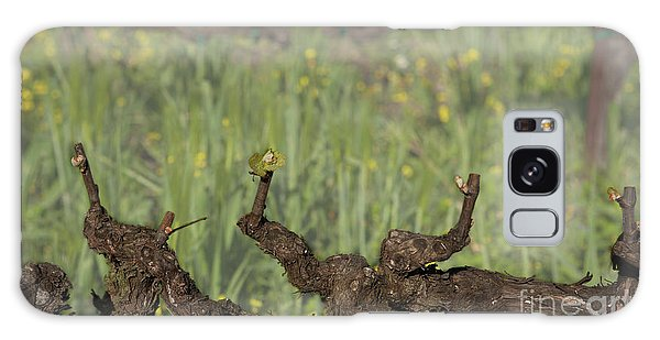 Budbreak In Carneros Galaxy Case
