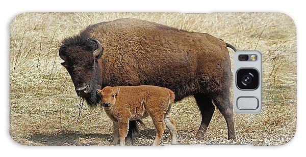 Buffalo With Newborn Calf Galaxy Case