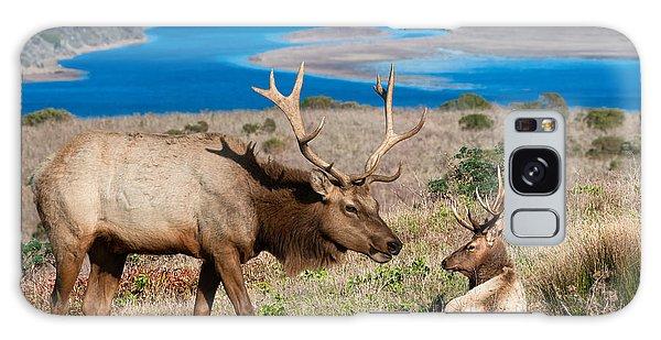 Bull Elk Above Tomales Bay Galaxy Case