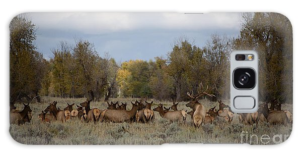 Bull Elk And Harem Galaxy Case by Sandy Molinaro