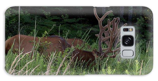 Bull Elk Grazing Galaxy Case