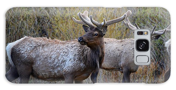 Bull Elk Rocky Mountain National Park Galaxy Case