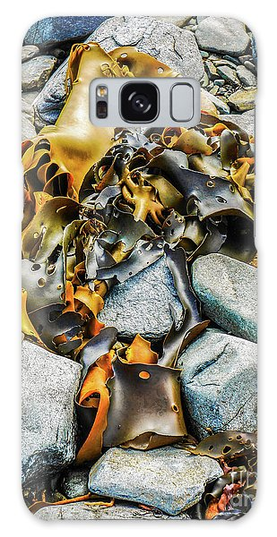 Bull Kelp On Blue Rocks Galaxy Case by Lexa Harpell