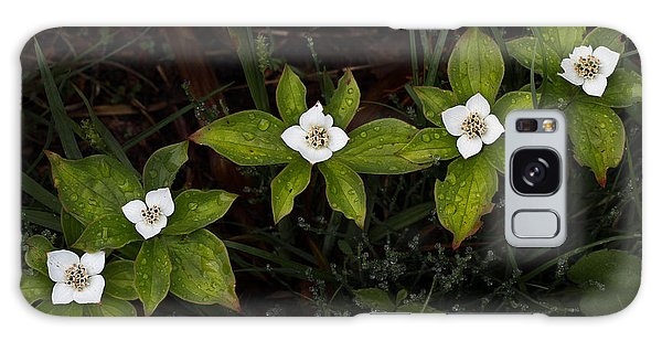 Bunchberry Flowers Galaxy Case
