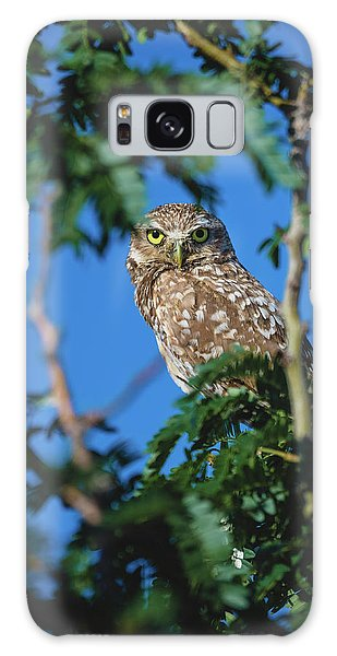 Burrowing Owl Sitting In A Tree Galaxy Case