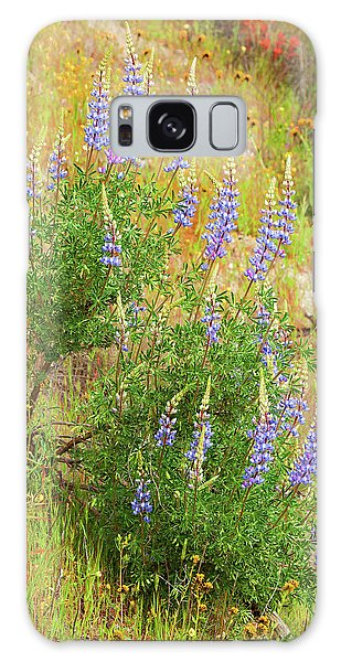 Galaxy Case featuring the photograph Bush Lupine by Ram Vasudev