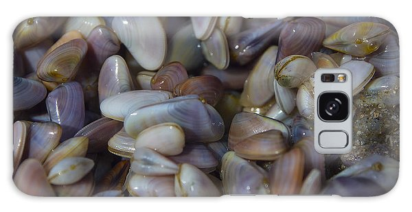 Padre Island National Seashore Galaxy S8 Case - Buttefly Clam Rainbow by Ian Johnson
