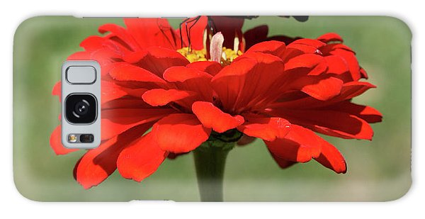 Butterfly On Red Zinnia Galaxy Case