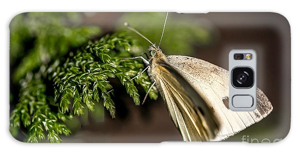 Cabbage Butterfly On Evergreen Bush Galaxy Case