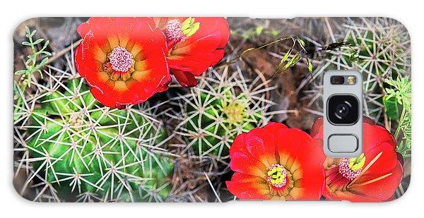 Cactus Bloom Galaxy Case