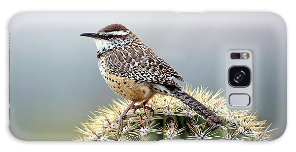 Cactus Wren On Saguaro Galaxy Case